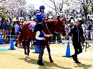 大型馬体験乗馬